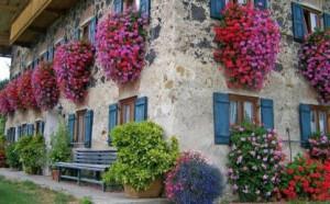 duvar-çiçekleri-483x300